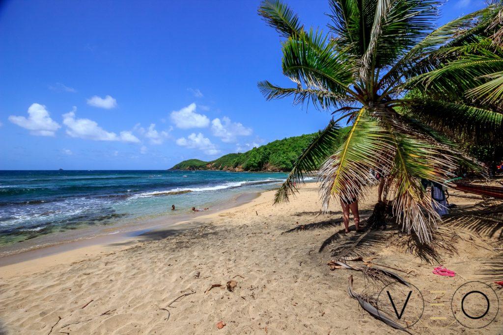 La plage des surfeurs, spot pour apprendre à surfer en Martiniique