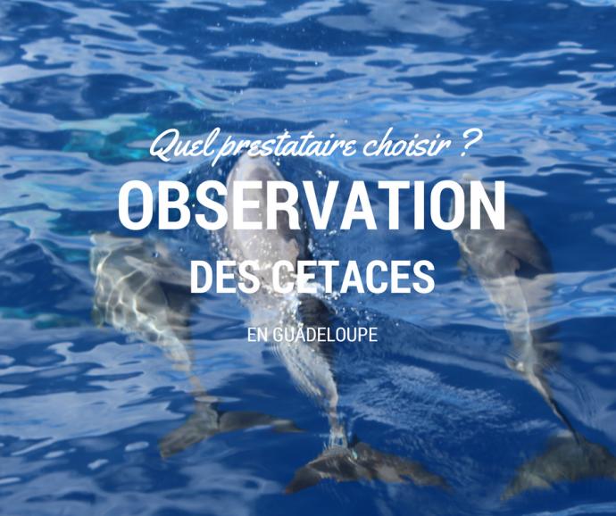 Sortie baleine en Guadeloupe