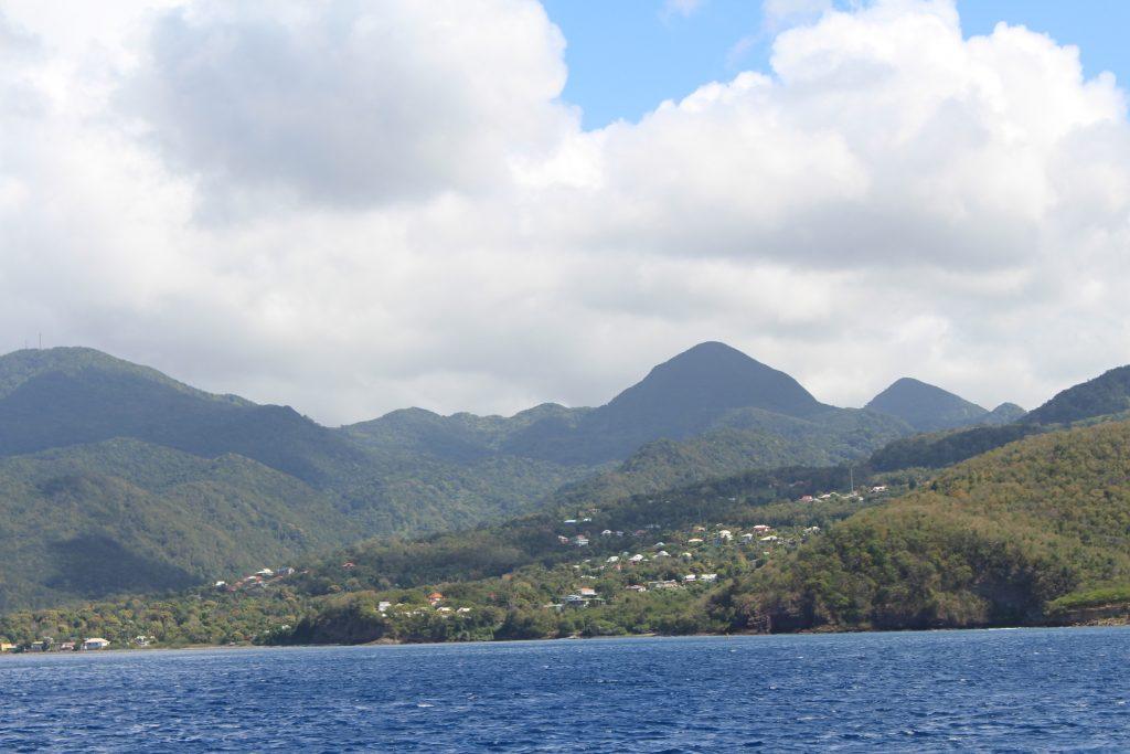 Voir des baleines en Guadeloupe