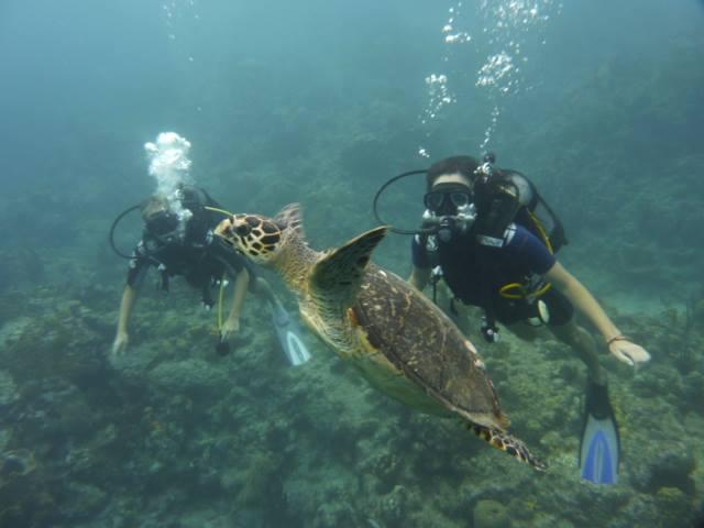 Mes 10 petits plaisirs en Basse-Terre