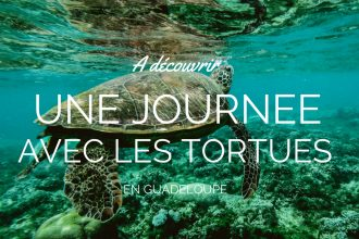 nager-tortue-guadeloupe