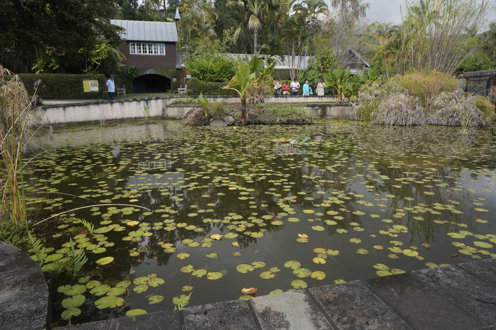 Notre top des jardins visiter sur l 39 le de la r union for Entretien jardin ile de la reunion