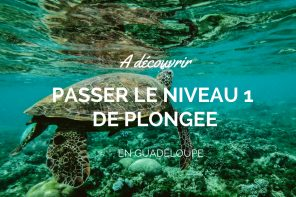 plonger-réserve-Cousteau-en-Guadeloupe