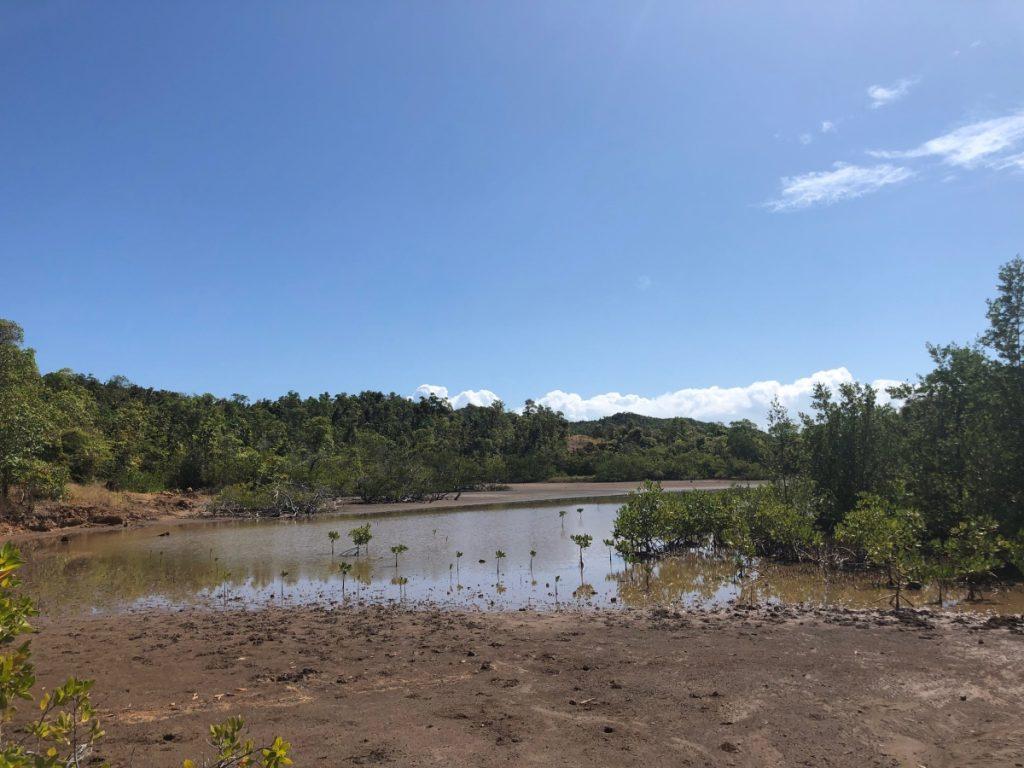 Mangrove Réserve Presqu'île de la Caravelle