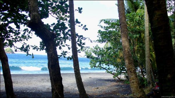 Martinique Spot Ceron