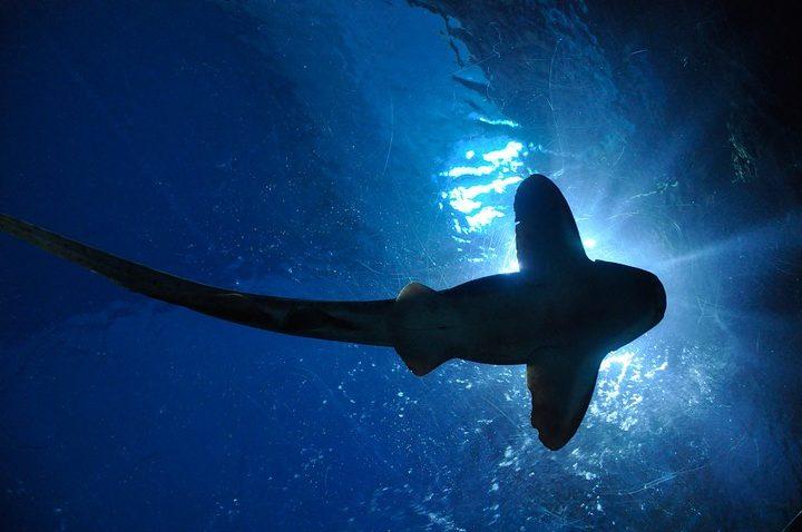 Surf Martinique danger requin