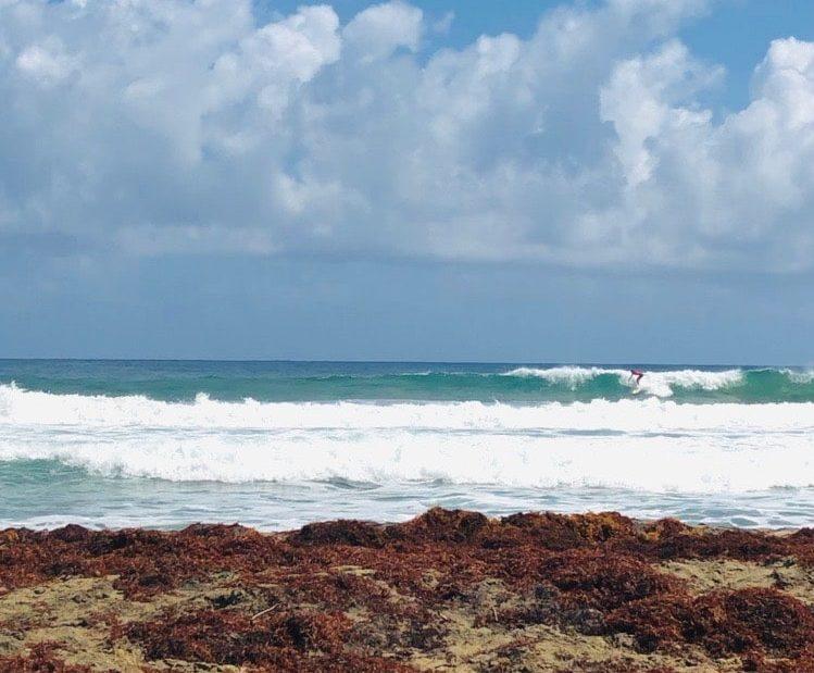 Martinique Spot Charpentier