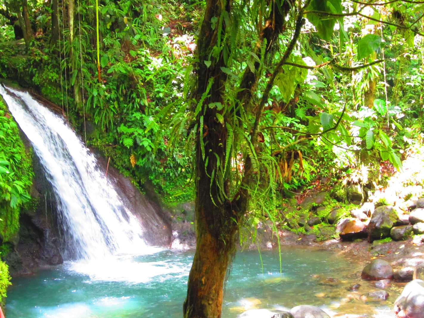 Payasage de cascade en Basse Terre