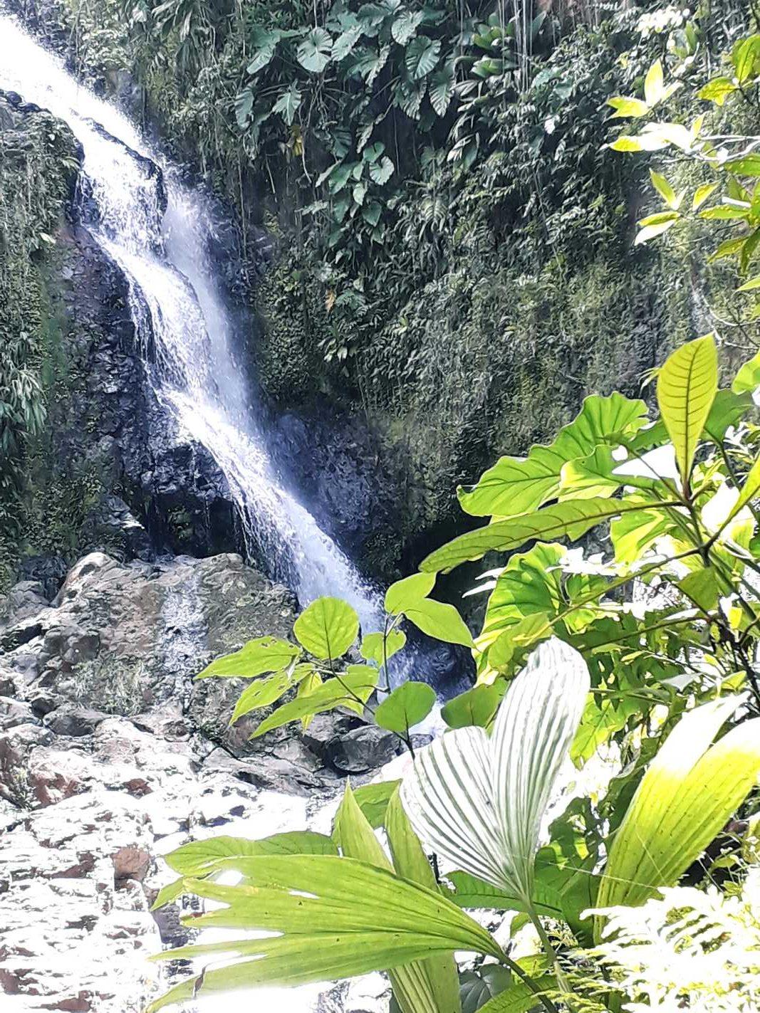 Cascade à ne pas manquer en Basse-Terre, Guadeloupe